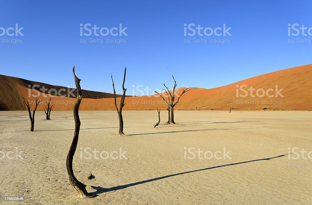 Some dead Trees in the desert stock photo