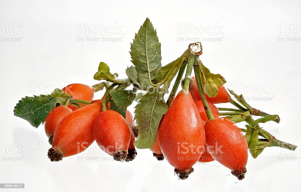 some fresh red ripe rose hips with leaves stock photo
