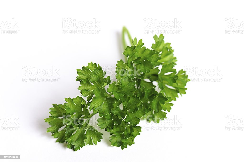 Some Green Parsley royalty-free stock photo