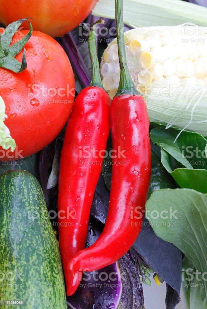some kinds of fresh vegetables royalty-free stock photo