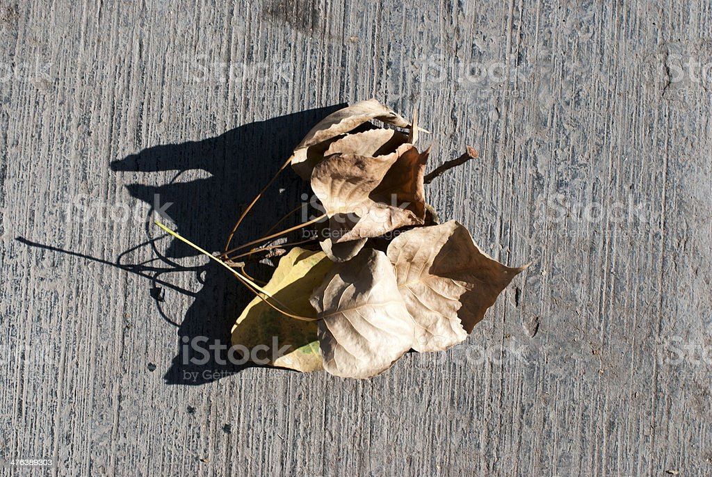 Some leaves royalty-free stock photo