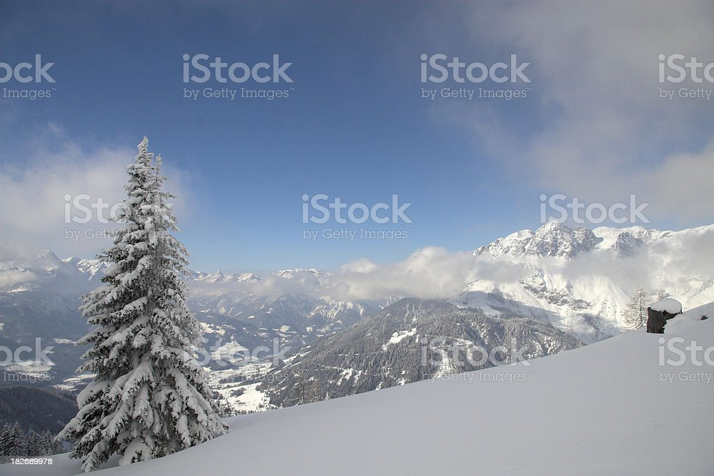 Some Lonely tree stock photo