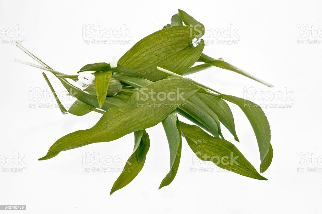 some lying fresh leaves Ramson stock photo