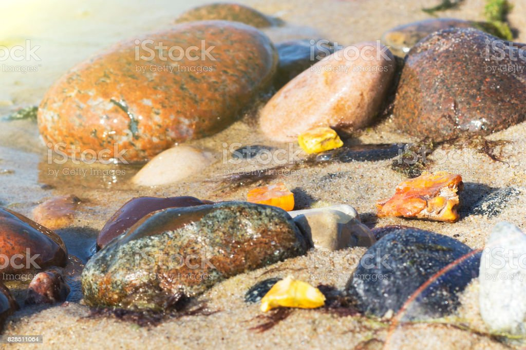 Some pieces of amber found on the Baltic seashore stock photo