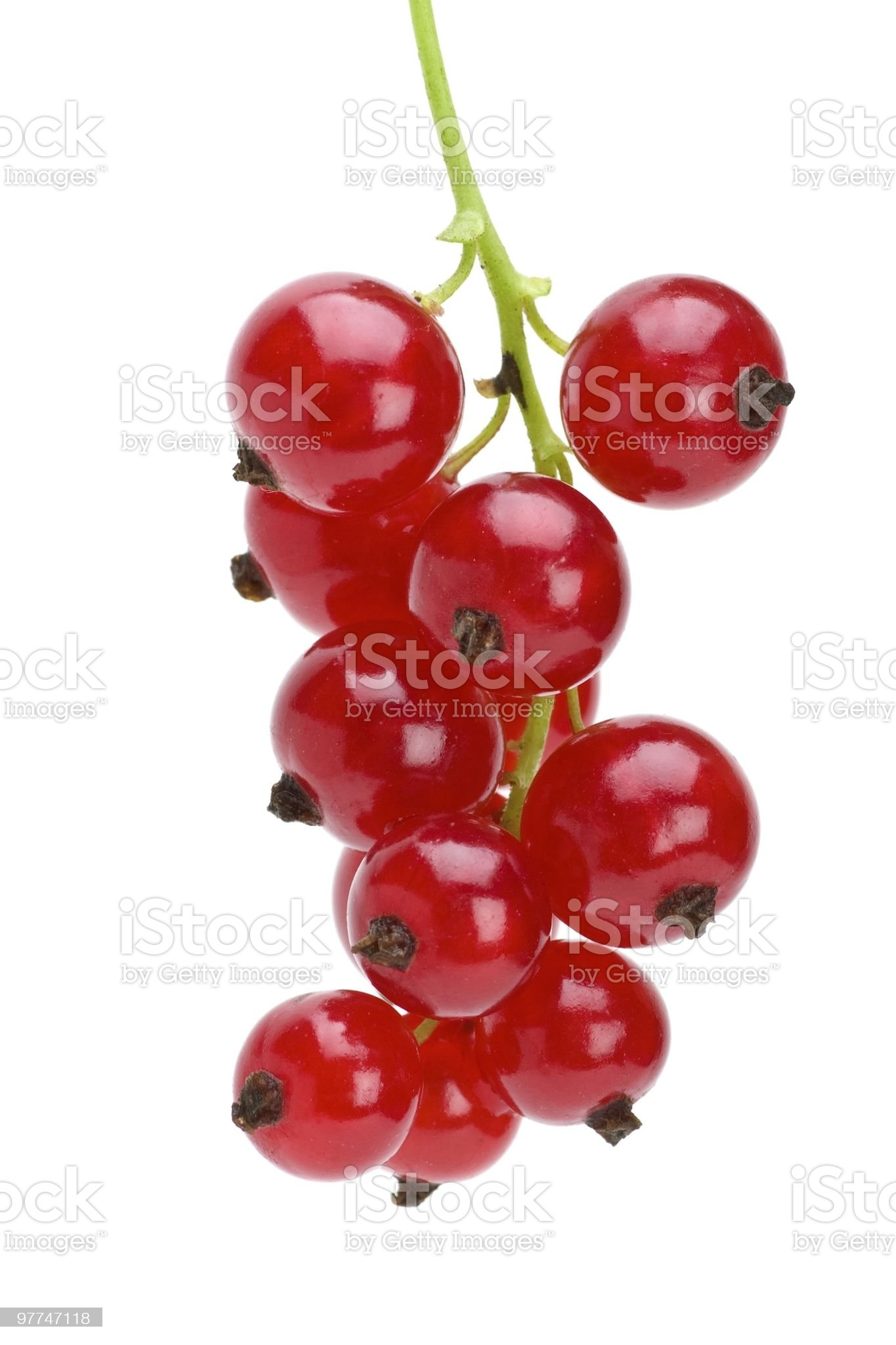 Some redcurrant berries royalty-free stock photo