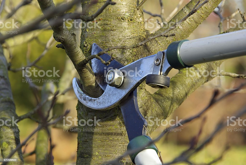 Someone cutting down the branches of a tree stock photo