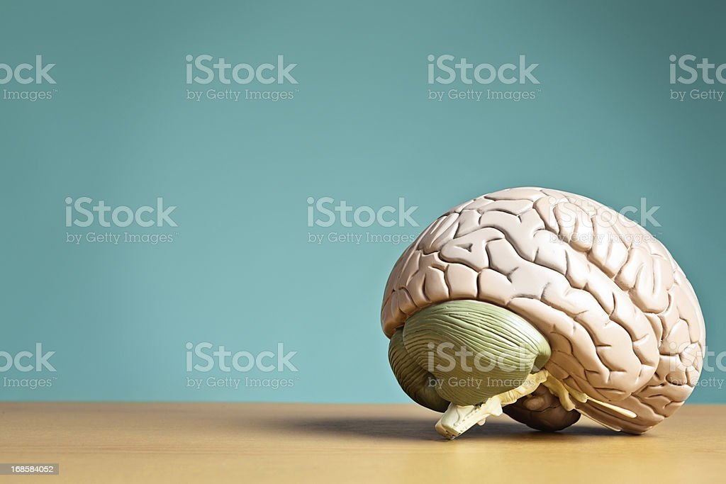 Something to think about: model brain sits on desk stock photo