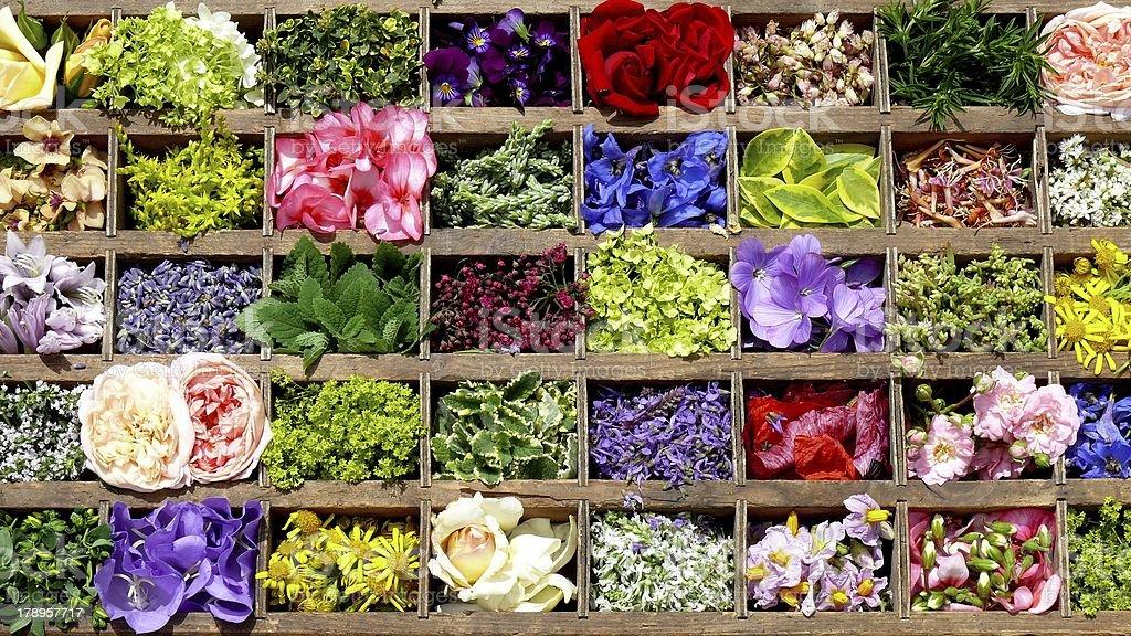 Sommerblüten photo libre de droits