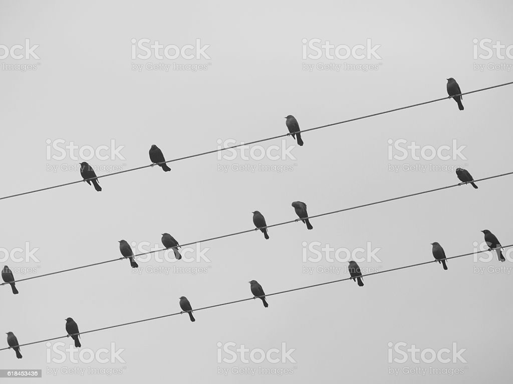 Song birds composing music stock photo