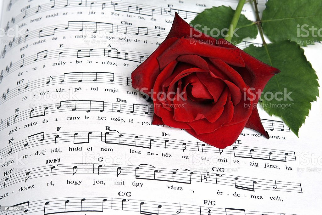 Song of rose royalty-free stock photo