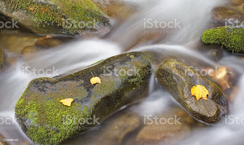 Song of the Stream series (XXL) stock photo