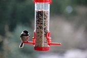 Songbird Birdfeeder