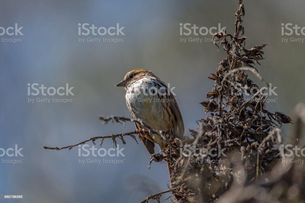 Songbird in a Dead Tree stock photo