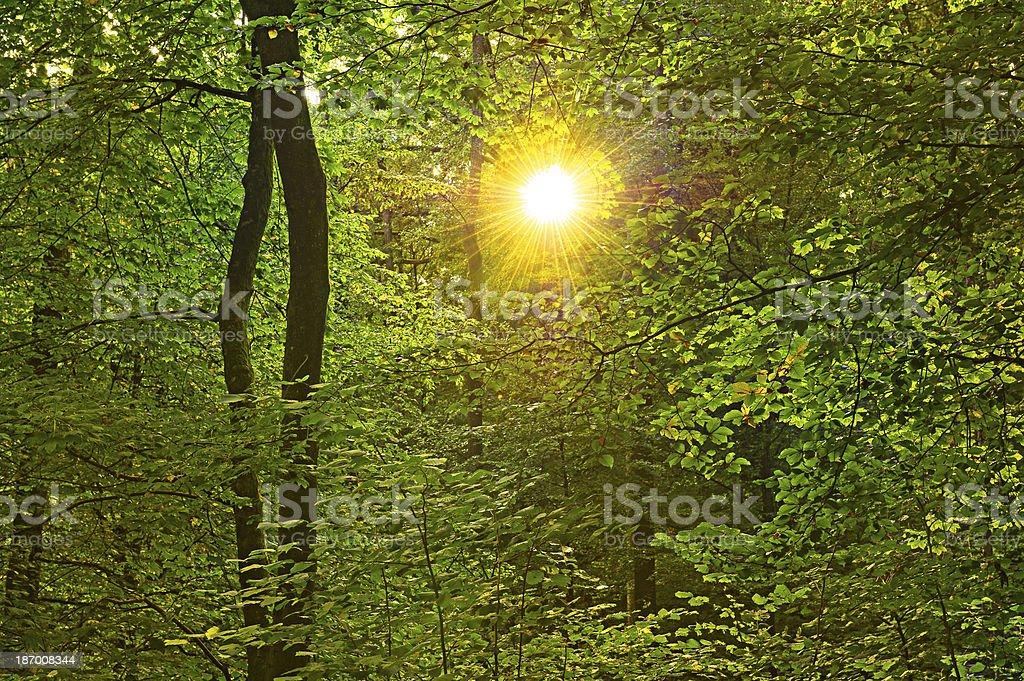 Sonnen leuchtet durch Baumkronen royalty-free stock photo