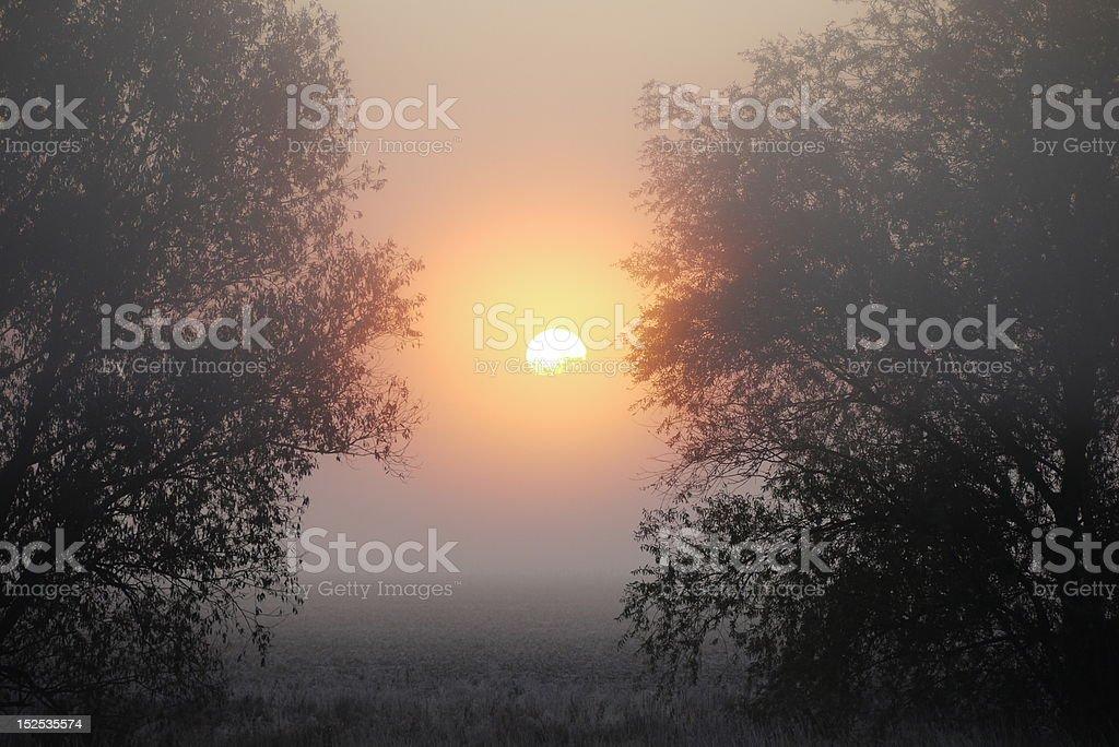 Sonnenaufgang in der Flussaue royalty-free stock photo