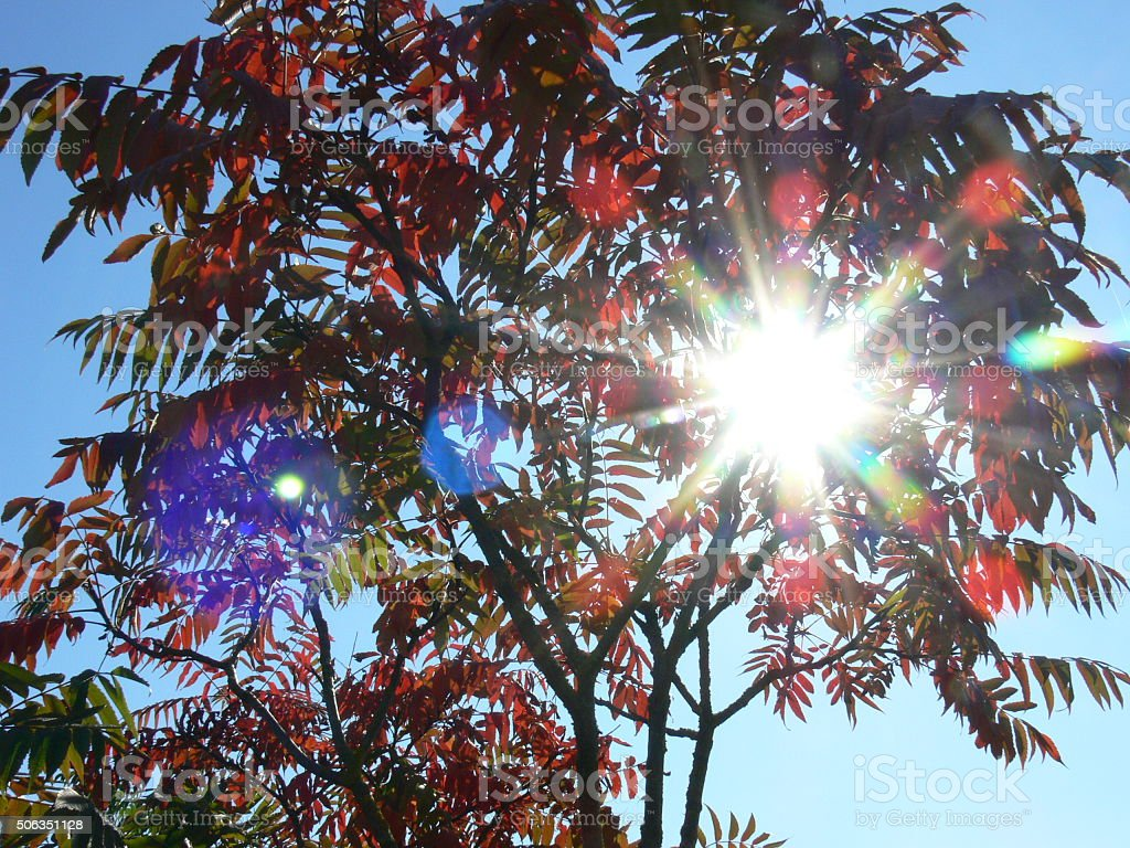 Sonnenlicht stock photo