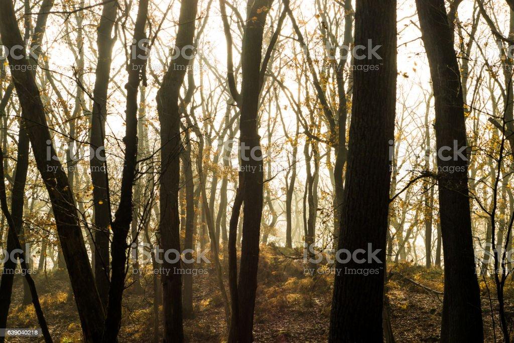 Sonnenschein im Nebelwald stock photo