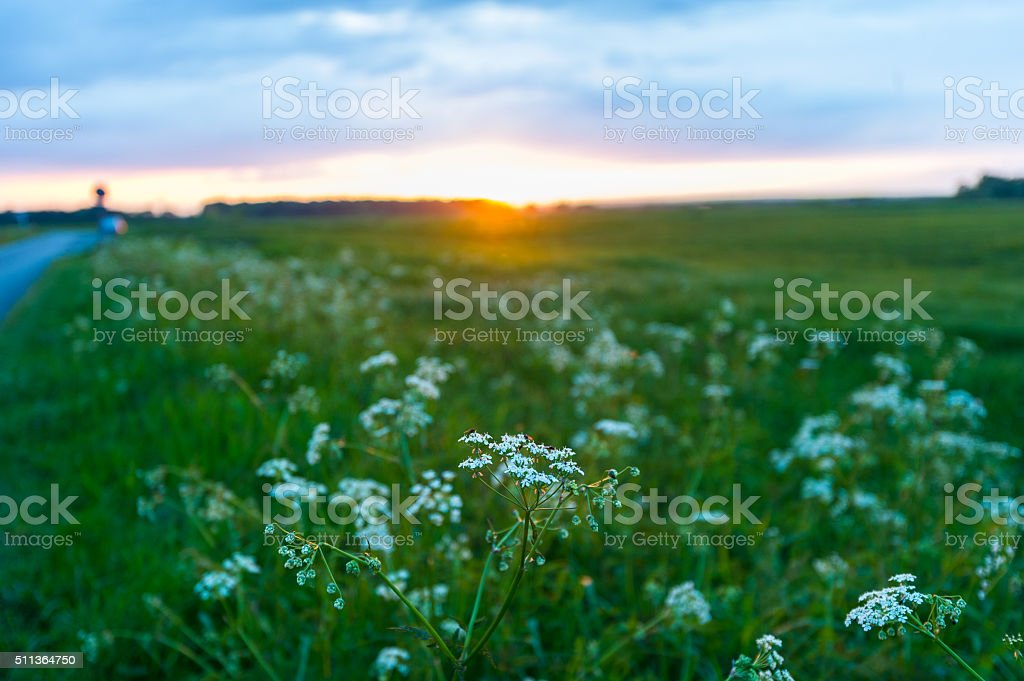 Sonnenuntergang am Doldenfeld stock photo