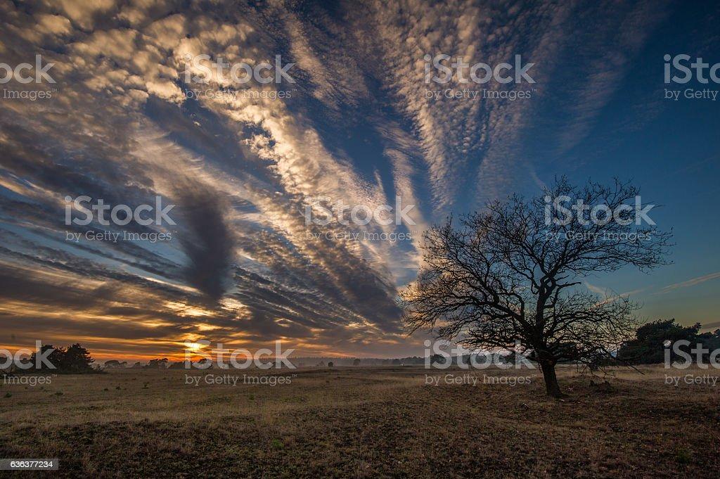 Sonnenuntergang im Nationalpark De Hoge Veluwe stock photo