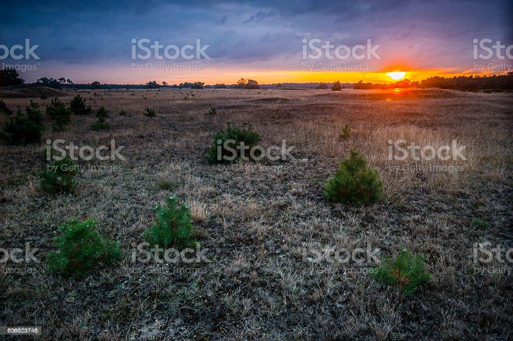 Sonnenuntergang in der Graslandschaft stock photo