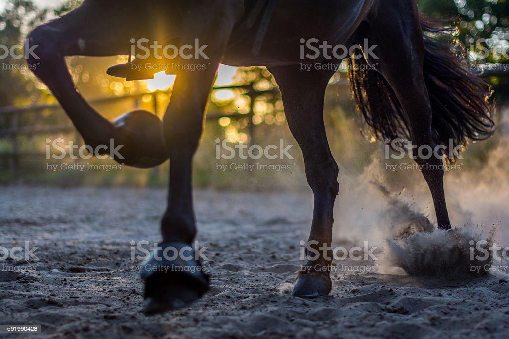Sonnenuntergang zwischen den Pferdebeinen stock photo