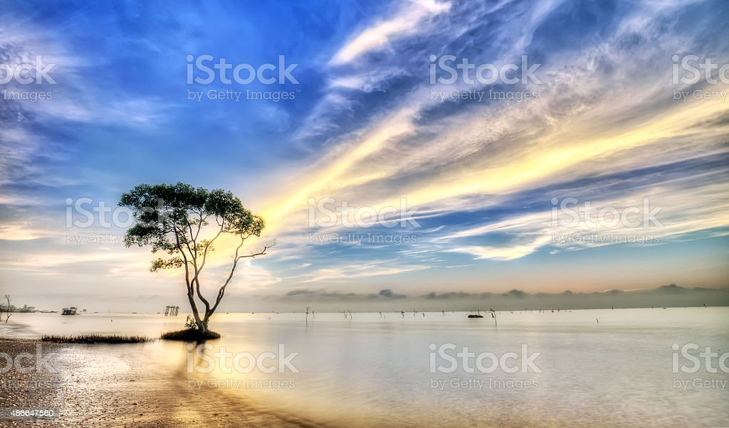 Sonneratia with cloudy dawn path stock photo