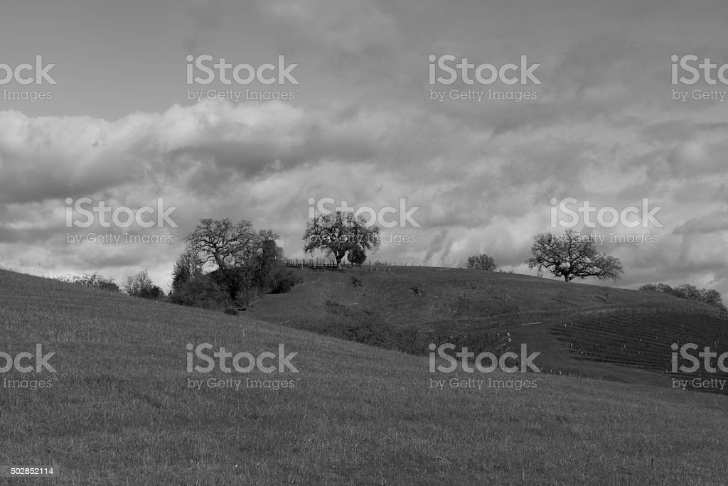 Sonoma valley in winter stock photo