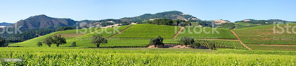 Sonoma Valley panorama stock photo