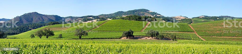 Sonoma Valley panorama stock photo