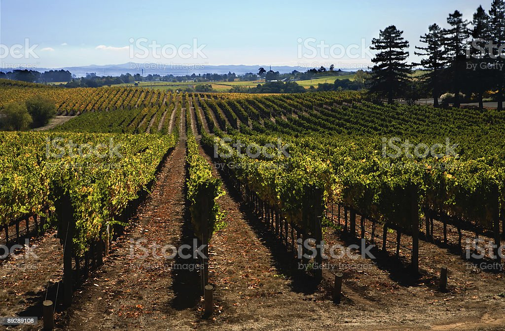 Sonoma Valley royalty-free stock photo