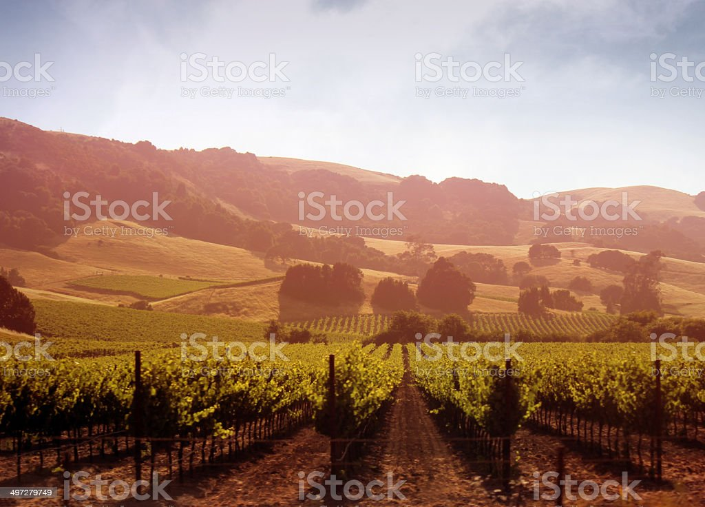 Sonoma Valley Vineyard at Dusk stock photo