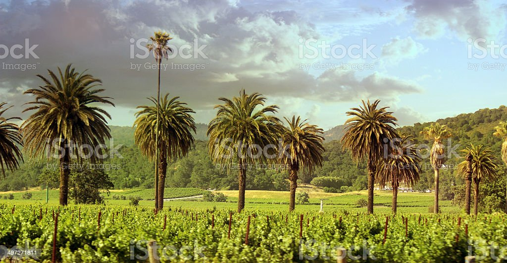 Sonoma Valley Vineyard stock photo