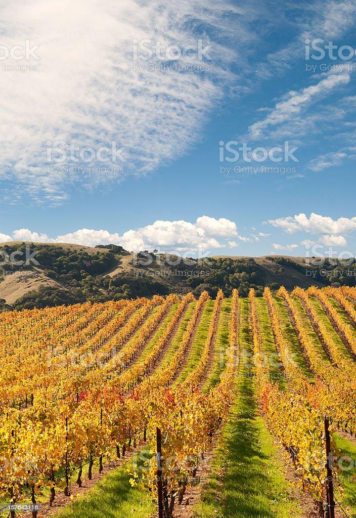 Sonoma Valley Winery Vines royalty-free stock photo