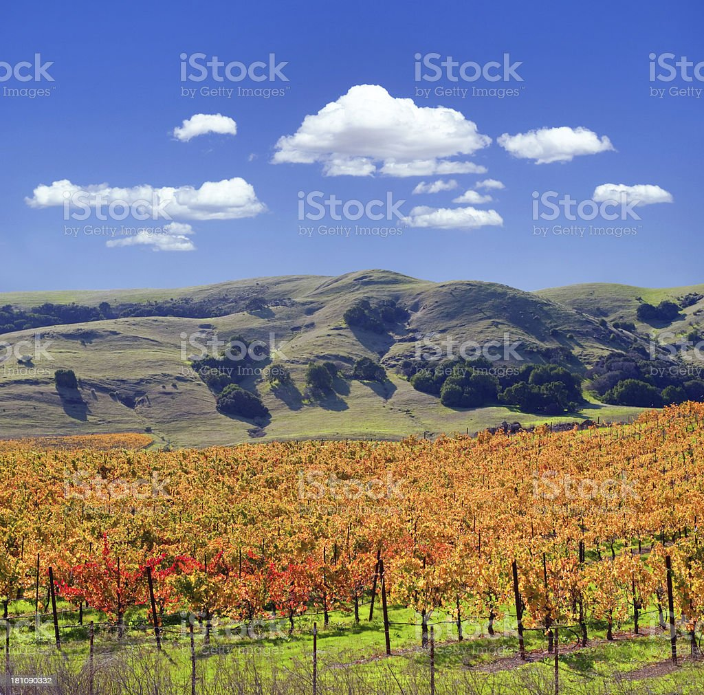 Sonoma Valley Winery Vines stock photo