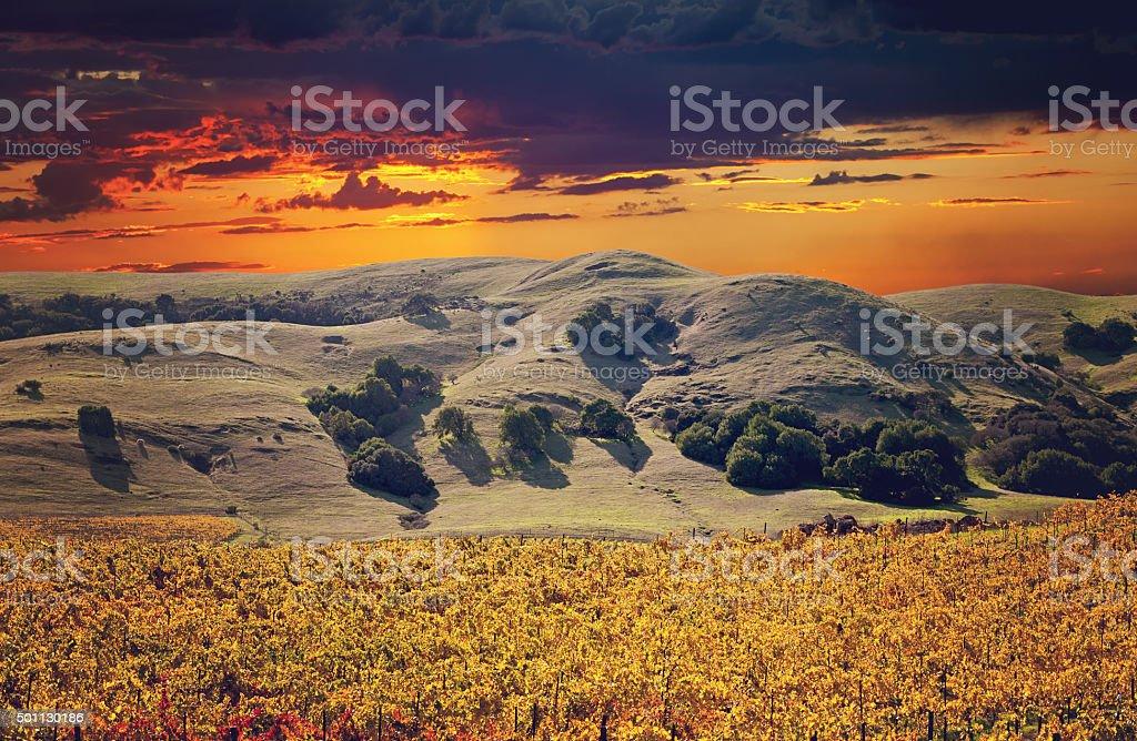 Sonoma Valley Winery Vines stock photo