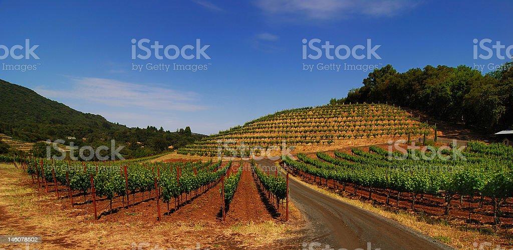 Sonoma Vineyard stock photo
