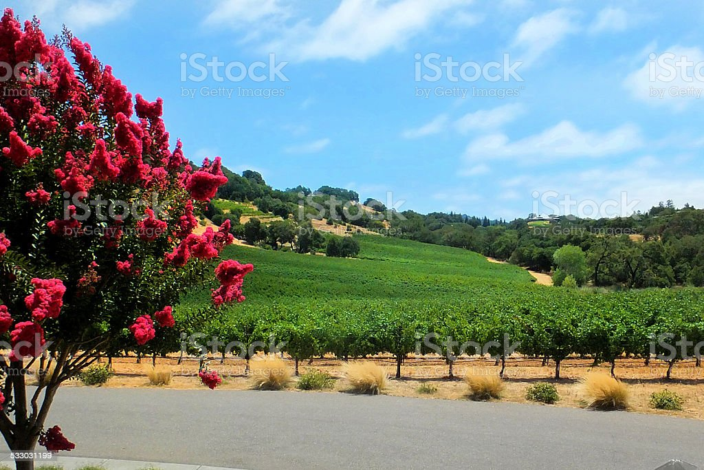 Sonoma Wine Country stock photo