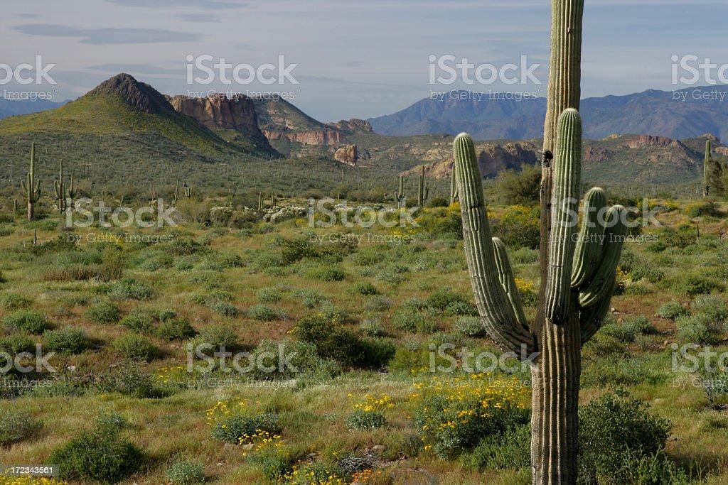 Sonora Desert royalty-free stock photo