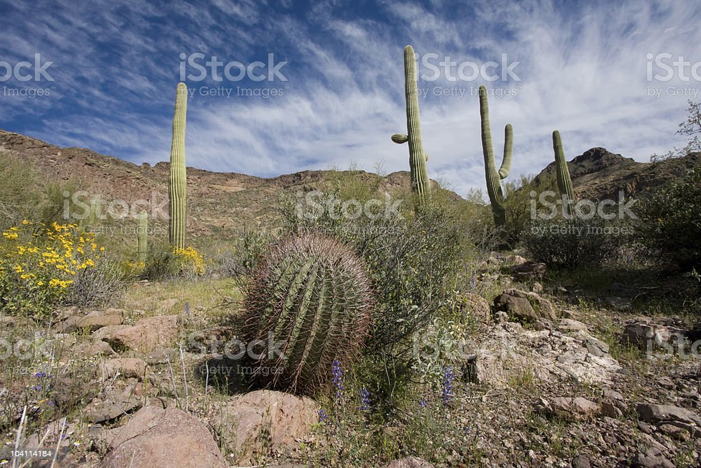 Sonoran Colors royalty-free stock photo