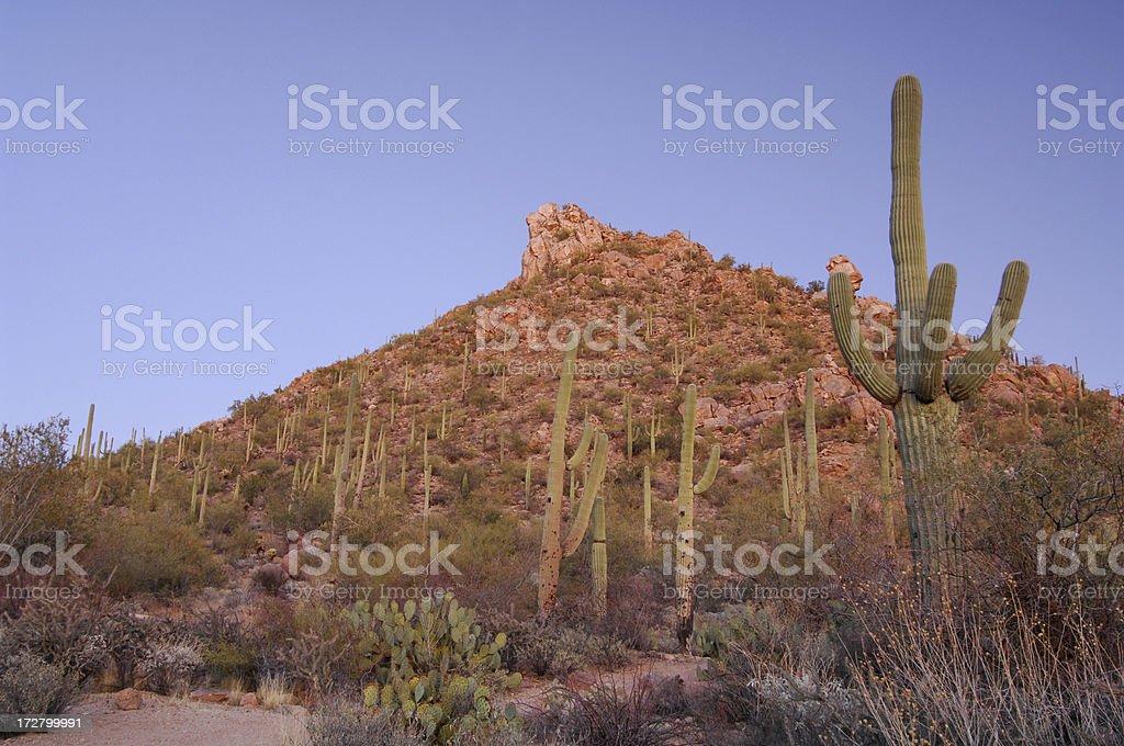 Sonoran Desert Arizona royalty-free stock photo