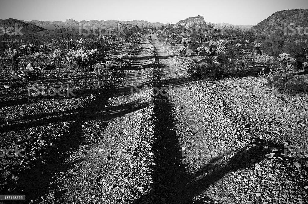 Sonoran Desert Dirt Road royalty-free stock photo