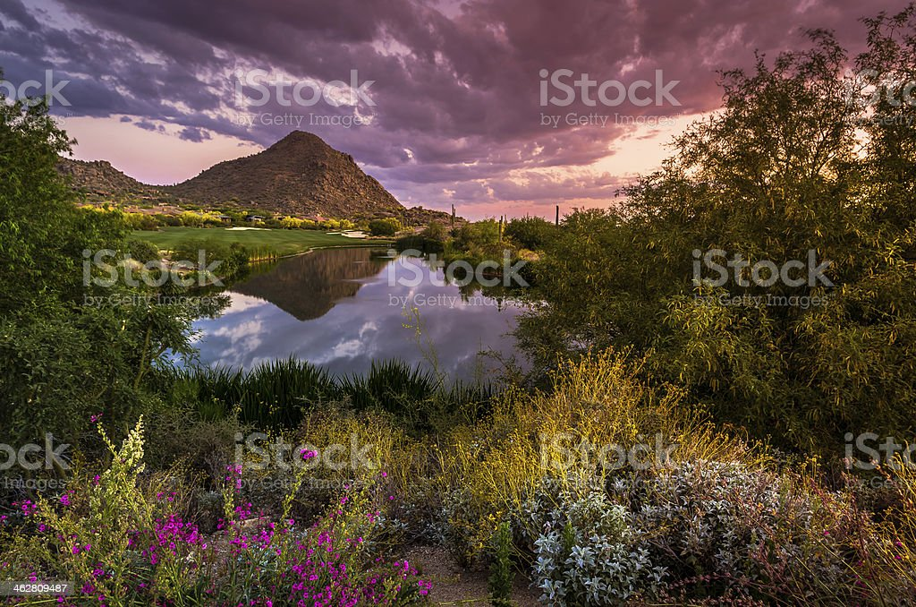 Sonoran Desert in Full Spring Bloom stock photo