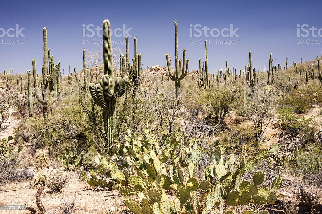Sonoran Desert Landscape royalty-free stock photo