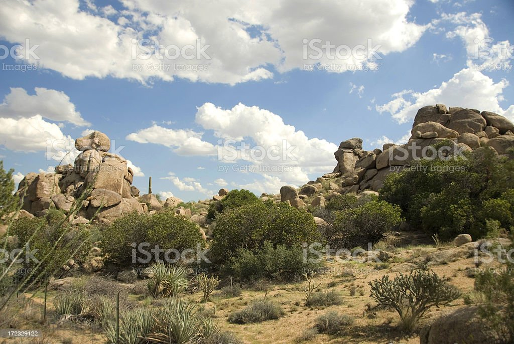 Sonoran Desert royalty-free stock photo