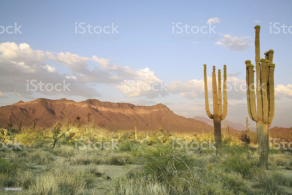 Sonoran Desert stock photo