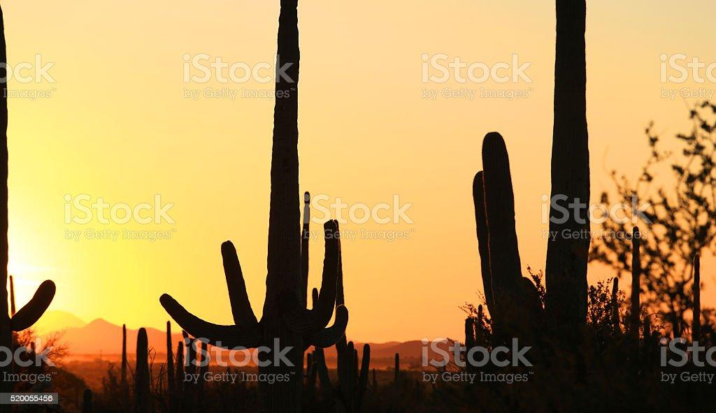 Sonoran desert sunset stock photo