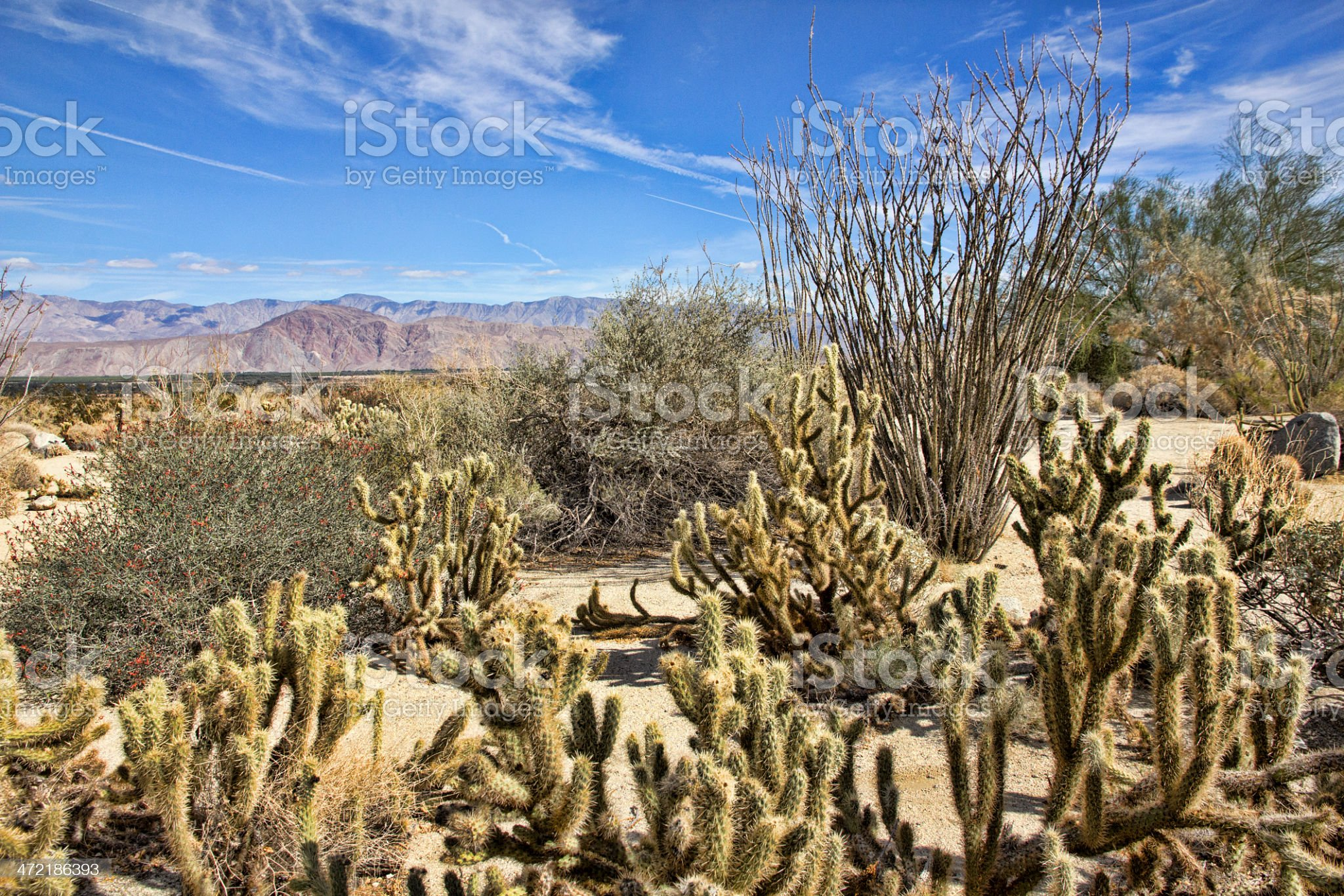 Sonoran Desert Vegetation in Anza-Borrego State Park royalty-free stock photo
