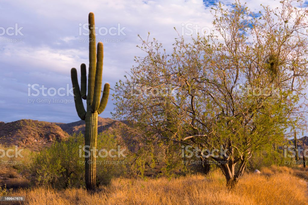 Sonoran Storm royalty-free stock photo