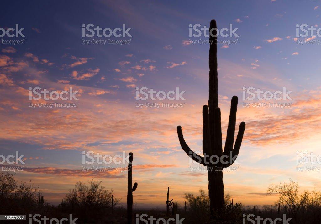 Sonoran Sunrise royalty-free stock photo