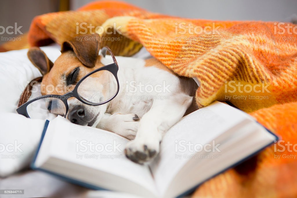 Soothing Reading books stock photo